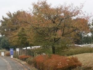 県駅伝  授業風景3